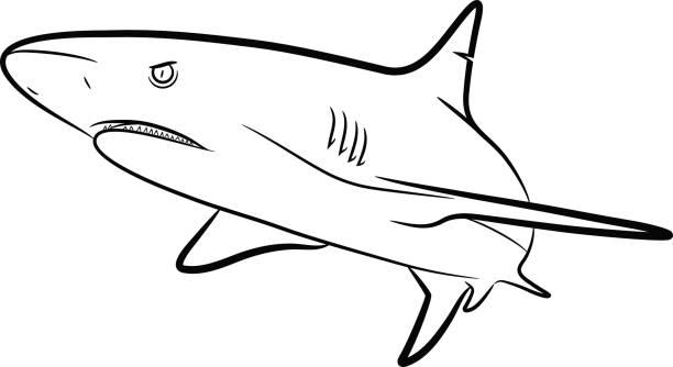 Shark clipart black.