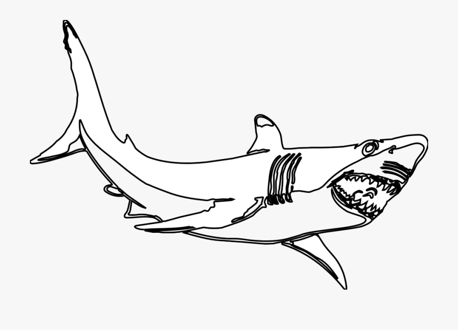 Megalodon drawing clipart.