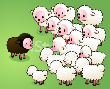 Black sheep the.