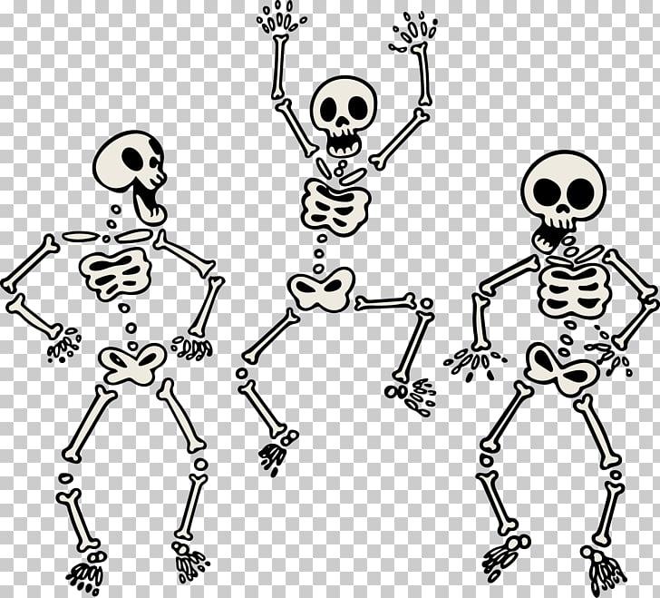 Human skeleton skull.