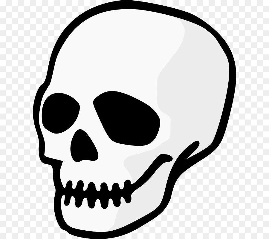 Human Skull Drawing clipart