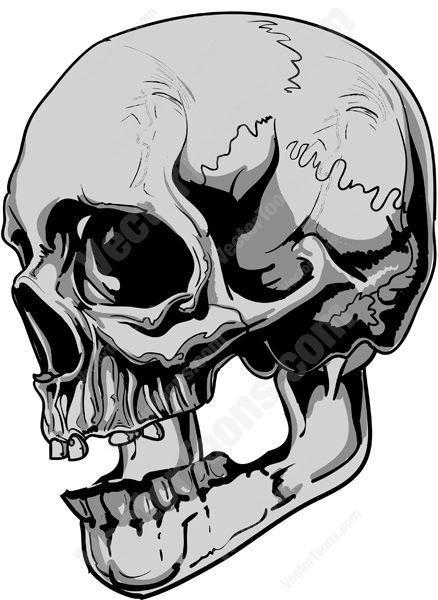Human skull skull.
