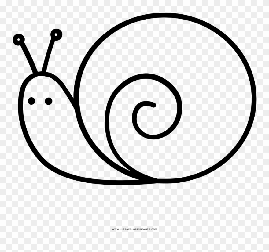 Snail clipart coloring pictures on Cliparts Pub 2020! 🔝