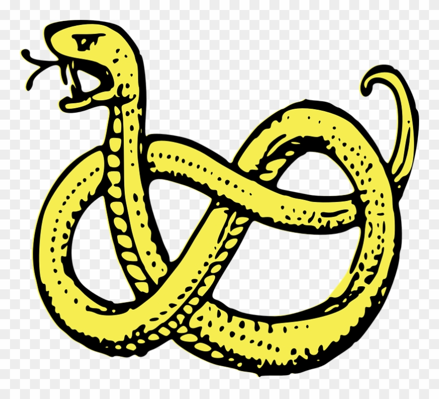 Snake coiled serpent.