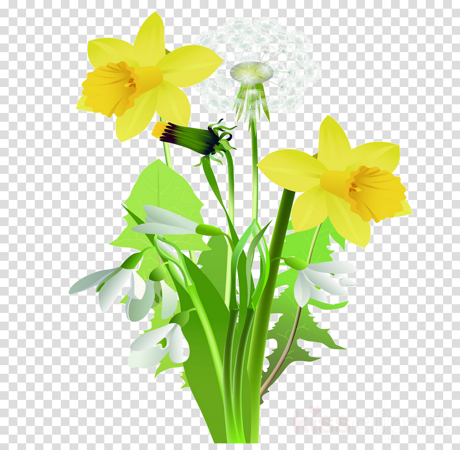 Spring flowers clipart daffodil pictures on Cliparts Pub ...