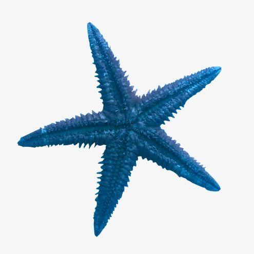 Blue starfish 2019.