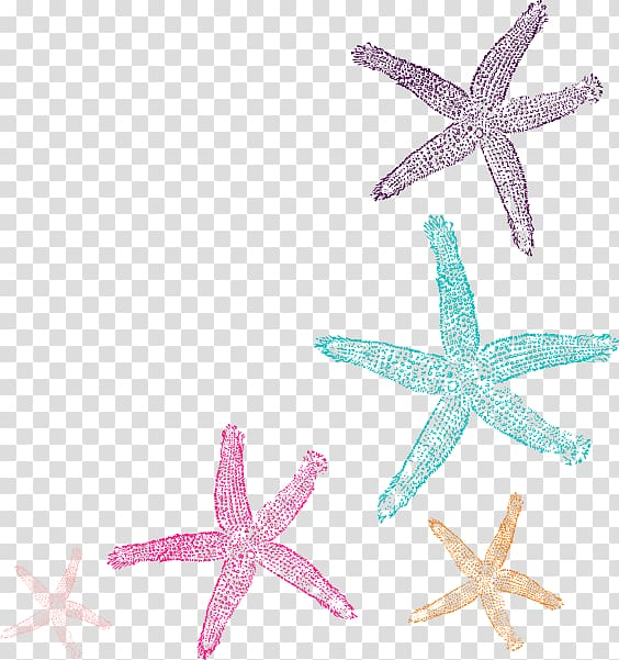 Five assorted starfish.