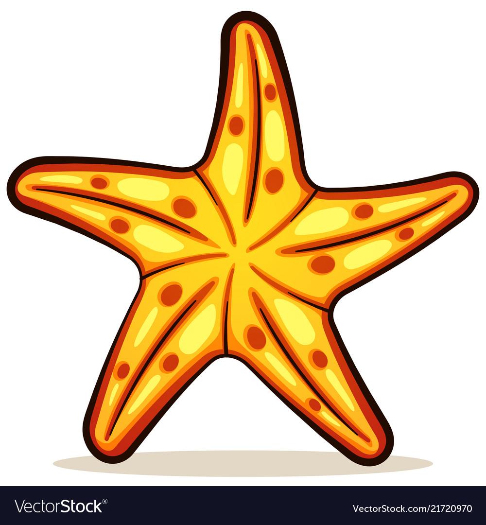 Starfish color design.