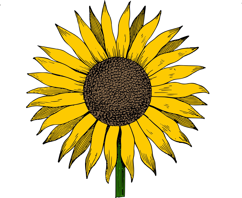 Sunflower free sunflowers.