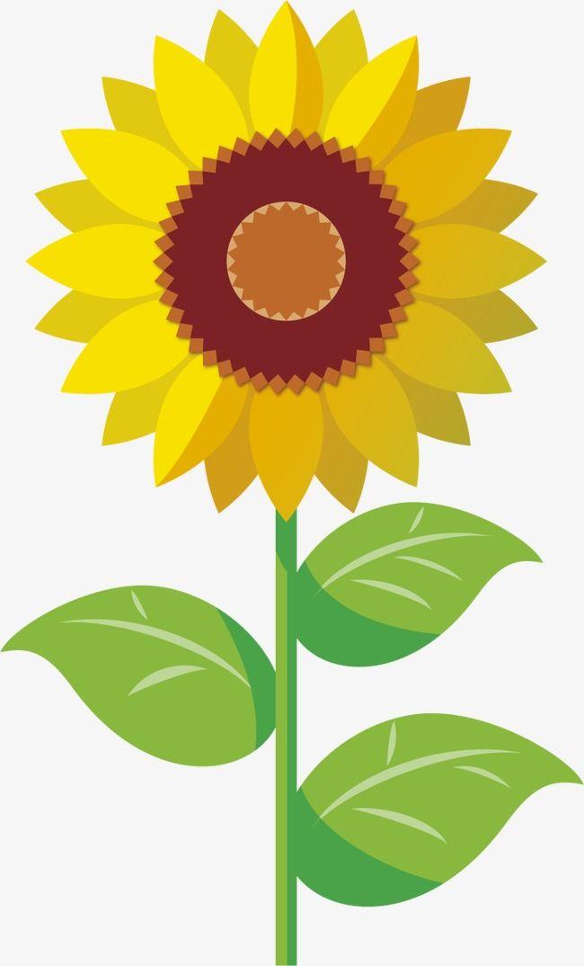 Sunflower yellow sunflowers.