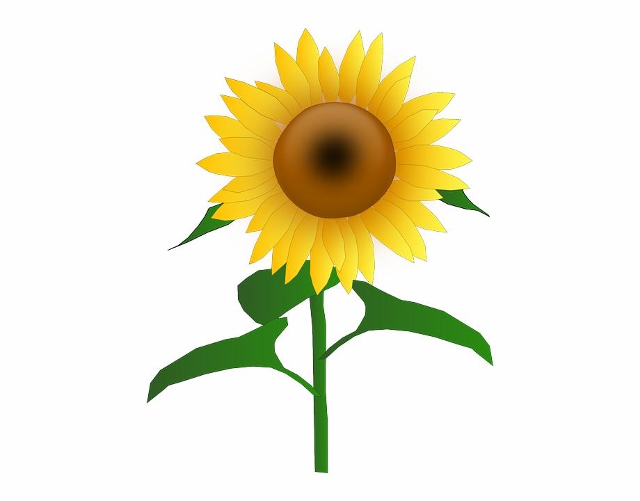 Sun flower cartoon.