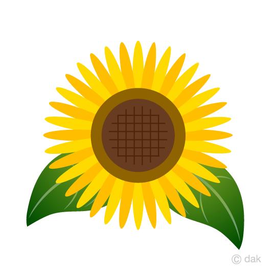 Sunflower free free.