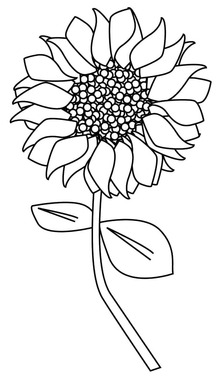 Sunflower clipart outline.