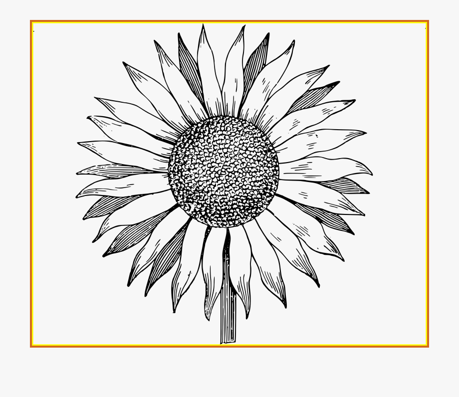 Sunflowers clipart outline.