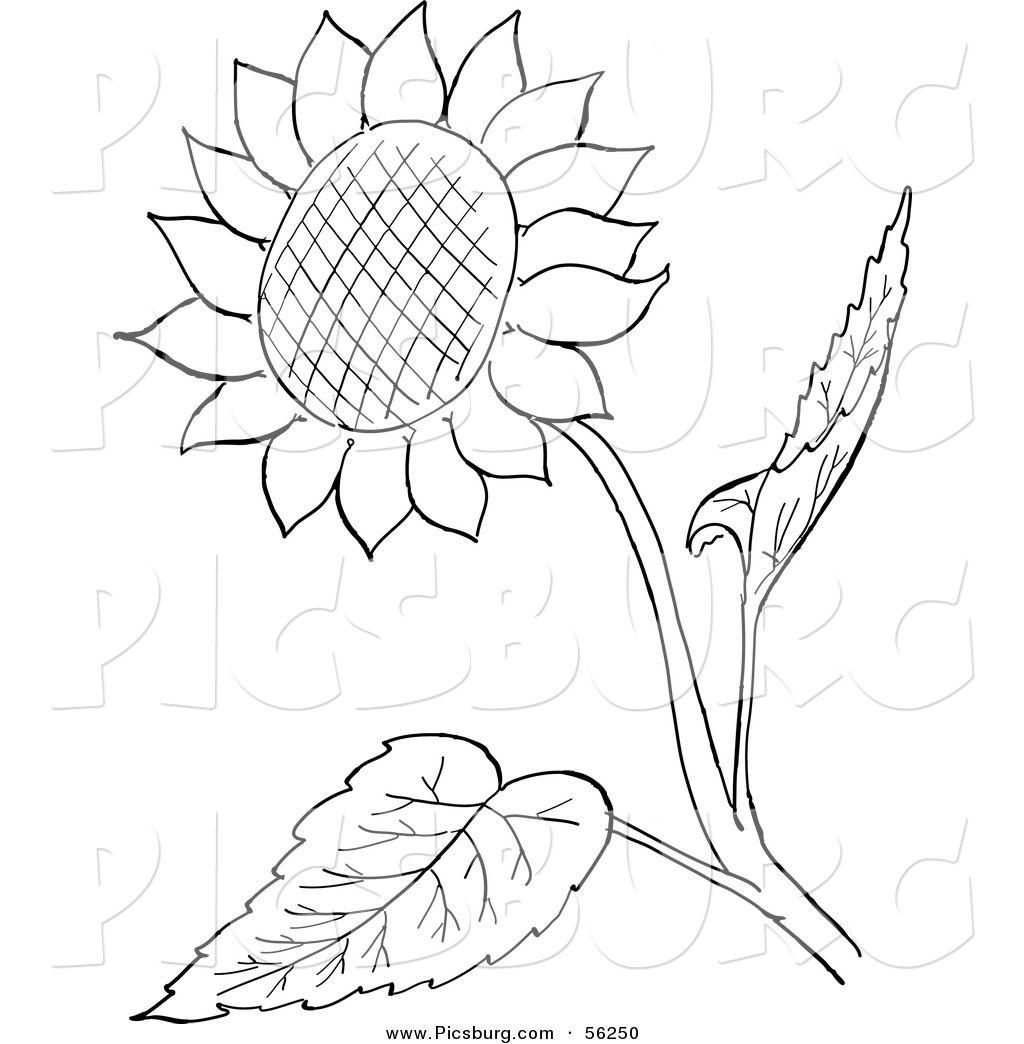 Clip art sunflower.