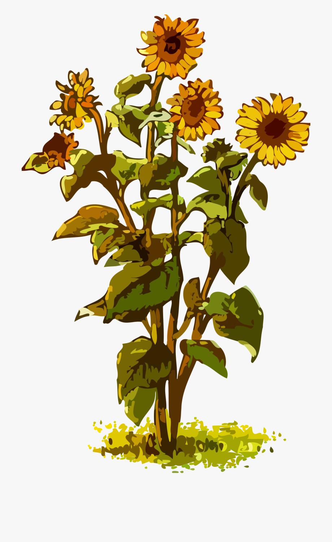 Text common sunflower.