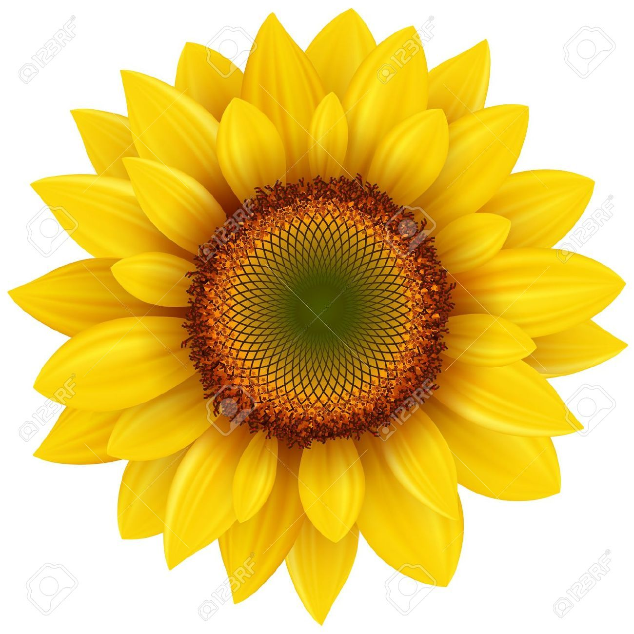 Sunflower clipart realistic pictures on Cliparts Pub 2020! 🔝