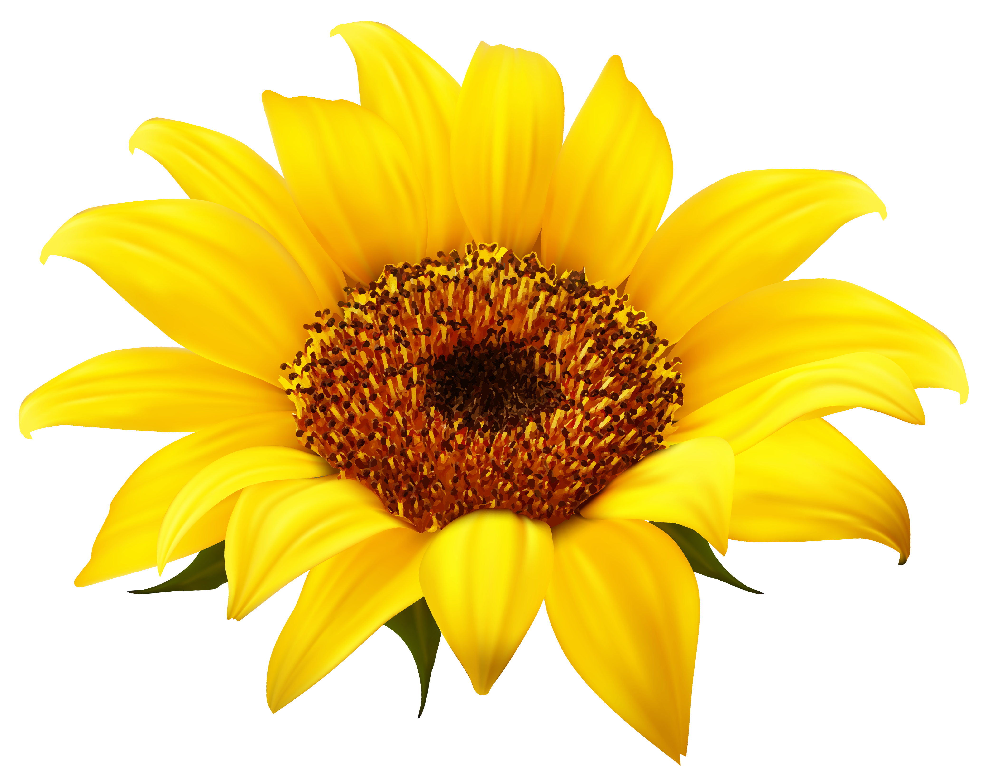 Sunflower clipart png.