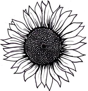 Find free sunflower.