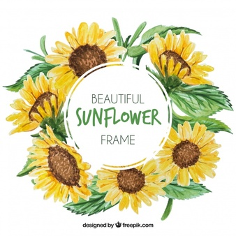 Sunflower vectors photos.