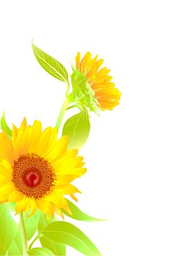Sunflower clipart wedding.