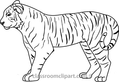Tiger black and.
