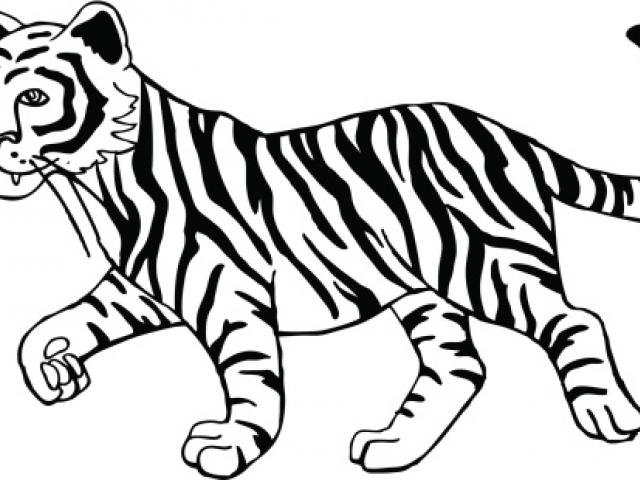 Free white tiger.