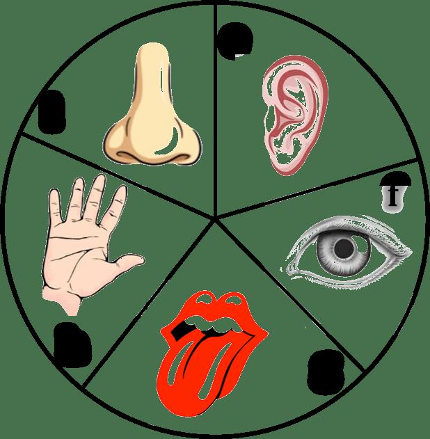 Tongue clipart senses.