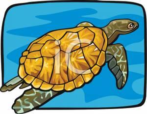 Tortoise swimming the.
