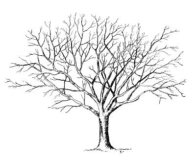 Best tree clipart.