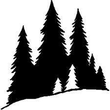 Pine tree black.