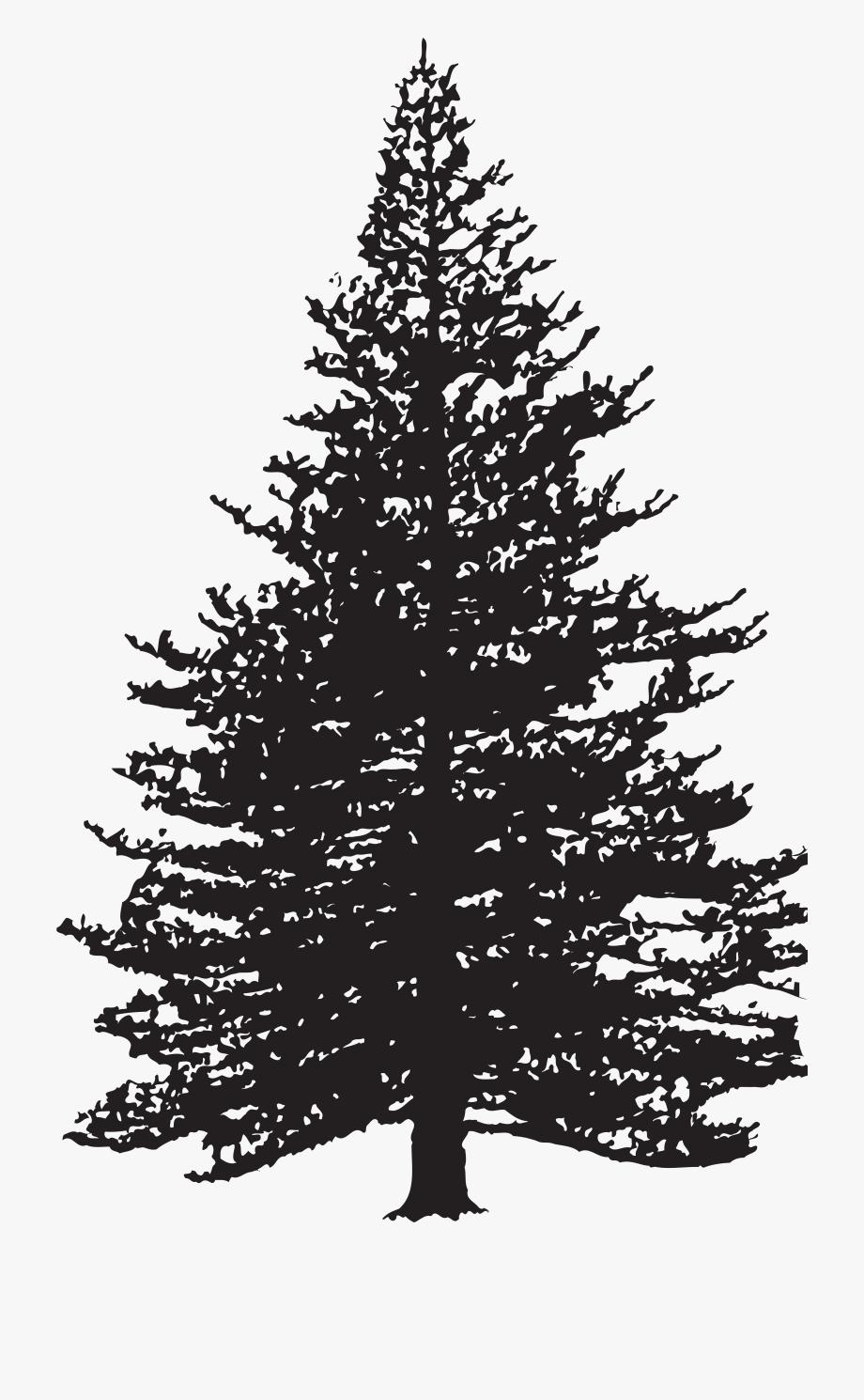 Pine tree silhouette.