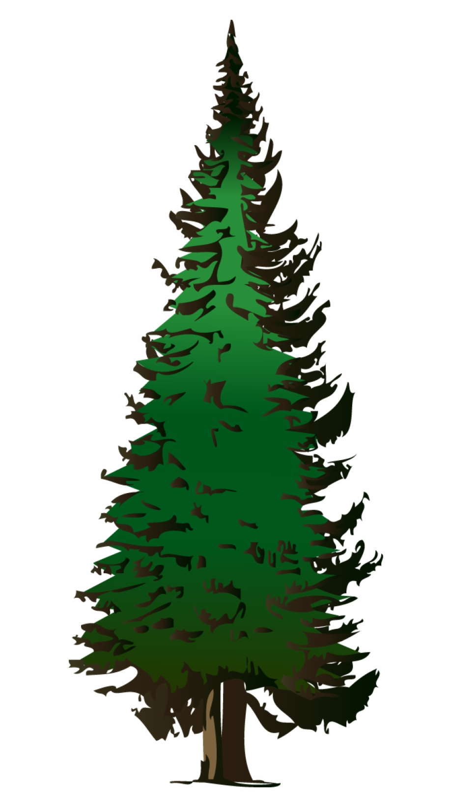 Fir Clipart Evergreen Tree