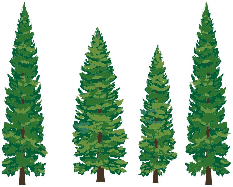 79 evergreen tree.