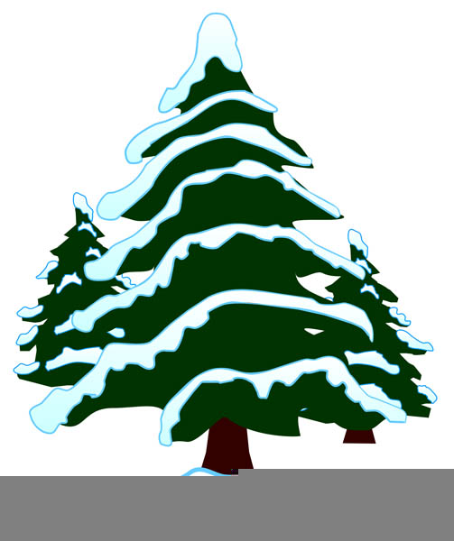 Snow Covered Evergreen Tree Clipart