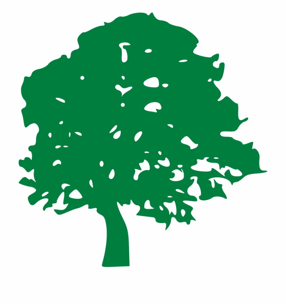 Tree Drawing Green Branches Png Image