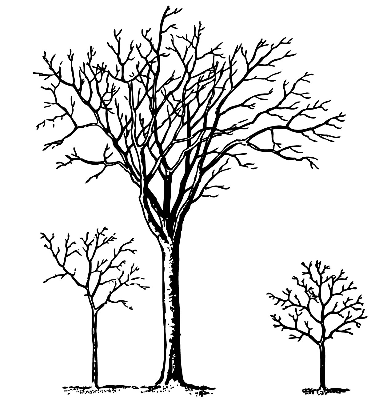 Free Line Art Tree, Download Free Clip Art, Free Clip Art on
