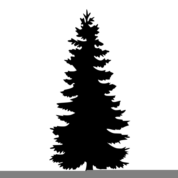 Pine Tree Silhouette Png