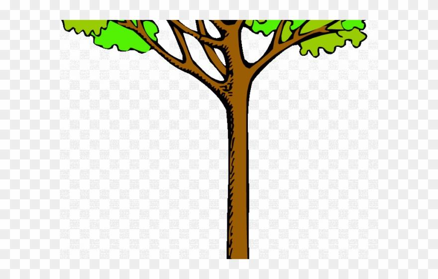 Tree Clipart Clipart Kauri Tree