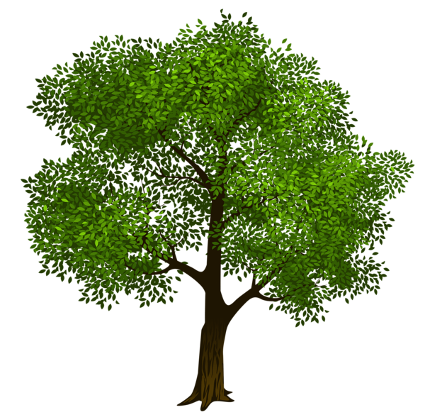 Transparent Green Tree Clipart Picture