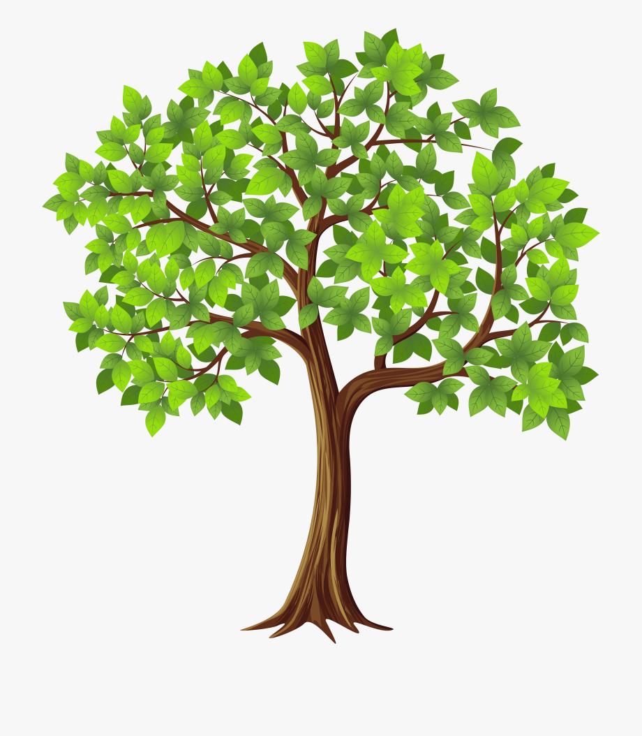 Tree png transparent.