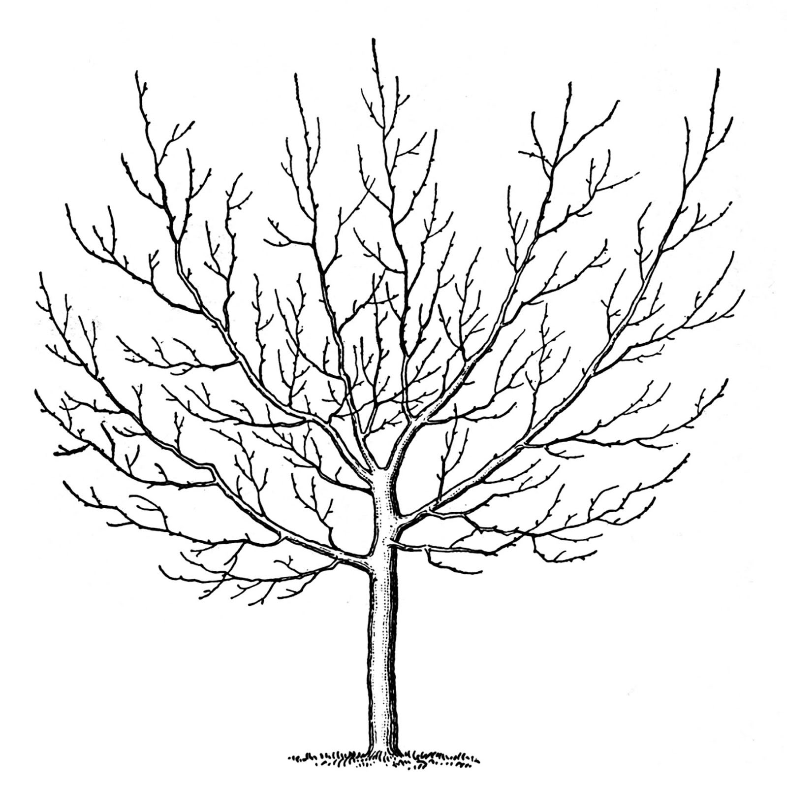 4 Winter Tree Images