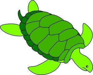 Free sea turtle.