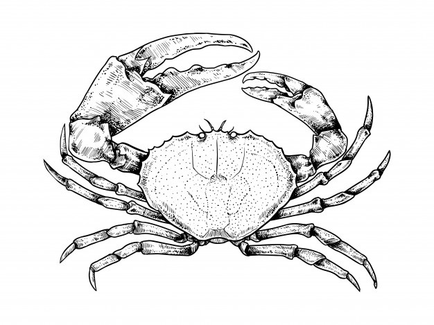 Crab vectors photos.
