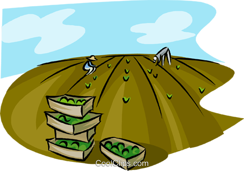 Workers harvesting a crop in a field Royalty Free Vector