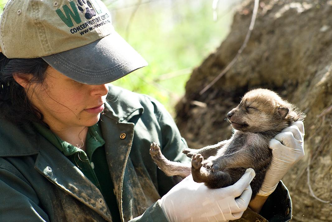 zookeeper clipart wildlife biologist